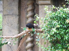 """Longleat Safari Park • <a style=""""font-size:0.8em;"""" href=""""http://www.flickr.com/photos/81195048@N05/8017512412/"""" target=""""_blank"""">View on Flickr</a>"""