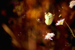 """A fleeting moment..."" (Ilargia64) Tags: fleetingmoment happiness colorful fantasy bubbles butterfly macro nature light bokeh amayasanchez"