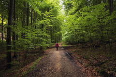 Fairytale (Appe Plan) Tags: forest tree trees branches crown path trail pathway road walk stroll hike nature landscape light summer green beautiful beauty appe nikon d700 germany rugen jasmund