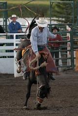 Tak_CPRA_2016-5108 (takahashi.blair) Tags: coachtak rodeo blairtakahashitakahashiblaircoachtakblairtakahashi pincher creek barrel racing bronc rope bareback steer bullriding
