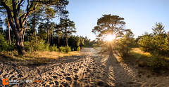 Den Treek panorama (Victor van Dijk (Thanks for 5M views!)) Tags: landscape landschap leusden utrecht dentreek bos forrest zandverstuiving pano panorama 815mm fisheye flare sunstars flair backlit longshadows sunset sand trees tree sky blue yellow green tracks sporen zand bomen boom