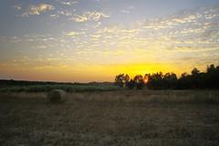 Sunrise in the field II (Capturedbyhunter) Tags: fernando caçador marques fajarda coruche ribatejo agolada santarém portugal pentax k1 fa 24mm 24 20 2 f20 f2 landscape paisagem nascer do sol sunrise outdoor feno