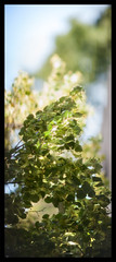 _MG_9864_s (dxyShen) Tags: toronto trees abstract bokeh nikon 200mm f2 canon 5dmkii