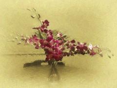 The flower in the vase smiles, but no longer laughs. (Malcolm de Chazal) (boeckli) Tags: flowers orchids orchideen blumen blten blossoms blooms indoor googlenik silverefexpro2 textures texturen red darkred netartii