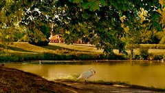 Douce France (Marie.L.Manzor) Tags: france 2016 versailles landscape nature lake water trees swan nikon nikon610 nikkor marielmanzor summer sun trianon wow natural sky