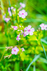 Pretty Little Flowers (aivzdogz) Tags: flowers nature garden plants beauty new jersey pink nj