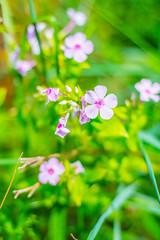 Pretty Little Flowers (aivzdogz) Tags: flowers nature garden plants beauty new jersey pink nj