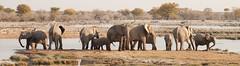 Namibia 2016 (341 of 486) (Joanne Goldby) Tags: africa africanelephant august2016 elephant elephants etosha etoshanationalpark explore loxodonta namiblodgesafari namibia safari