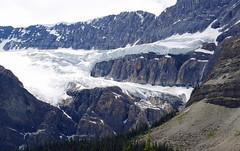 Crowfoot Glacier (foxtail_1) Tags: crowfootglacier glacier banff banffnationalpark alberta icefields parkway
