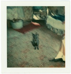 Fuzzy Dog (Alan Mays) Tags: ephemera photographs photos foundphotos snapshots portraits dogs animals interiors livingrooms furniture rugs carpets tvs televisionsets fuzzy blurry blurred flawed humor humorous funny amusing old vintage