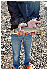 Cutthroat Trout, Jackson Lake Dam, Grand Teton National Park, Wyoming (2KMILER) Tags: trout fishing grandteton nationalpark grandtetonnationalpark jackson wyoming flyfishing tenkara snakeriver thenorthface jeans rainjacket nike cutthroattrout river rocks livestrong