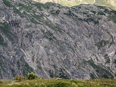marmot (genelabo) Tags: heilbronner hhenweg mdelegabel rappenseehtte oberstdorf alpen mountains berge steinbcke steinbock ibex capricorn kemptner htte alps biwak outdoor hiking murmeltier marmot fels