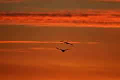 Sunset 2 (glenbodie) Tags: glen bodie glenbodie reifel
