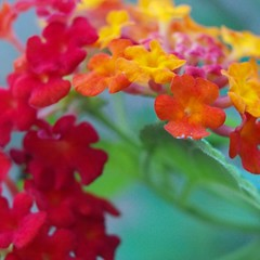 P9091229 (SnapRat200) Tags: epl6 macro extensiontube nature olympus flowers