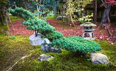 Sokushuin, Subtemple of Tofukuji, Kyoto (Christian Kaden) Tags: autumn herbst jahreszeit momiji moos moss natur nature pflanze pflanzen plant season sokushuin sokusoin sugigoke tempel temple tofukuji