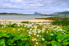 Sommary (John A.Hemmingsen) Tags: landscape sommary hja flowers beach clouds troms troms fujifilm