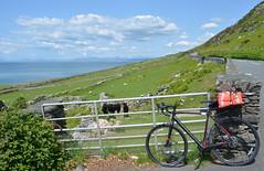 [23:05:16] (norman preis) Tags: dmeurig normanpreis 2016 haf summer cymru beicio wales cycling touring tour twrio trip taith gogledd de ogastellneddiborthmadog neathtoporthmadog diwrnod2 llwyngwril fairbourne rheilffordd mor sea railway penllyn coast arfordir gwartheg