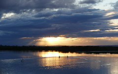 A brooding sky! (The Pocket Rocket) Tags: broodingsky sunset oceangrove pelicans barwonriver victoria australia