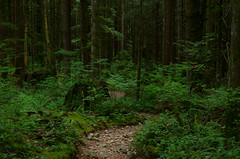 Only to Return (Kristian Francke) Tags: path bc canada british columbia fall golden ears provincial park depth field dof green tree trees plants nature natural brown rocks old pentax helios 44k4 zenit