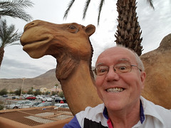 September 19, 2016 (3) (gaymay) Tags: california desert gay love riversidecounty coachellavalley geocache search palmdesert camels statues artclimbers