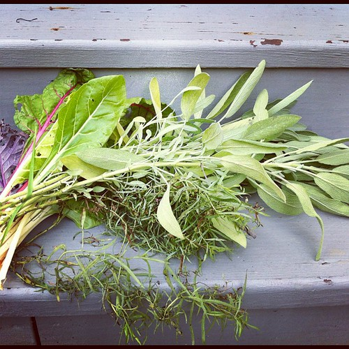 Kale, Swiss Chard & Herbs to dry #southloop #communitygarden