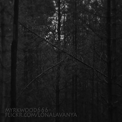 Dagaz  (Myrkwood666) Tags: wood bw monochrome forest blackwhite symbol zwartwit sw schwarzweiss bos wald pagan rune futhark dagaz asatru seelenwinter mrkskygge myrkwood666