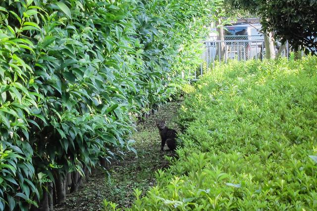 Today's Cat@2012-08-16