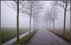 Foggy Afternoon (Colpics) Tags: autumn holland fog utrecht foggy baretrees haarzuilens canoneos5dmkii canonef2485mmusmlens