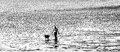 Man's Best Friend (terrymorrisphotography) Tags: ocean shadow sea dog white abstract black reflection art beach nature water wales river landscape outdoors person photography sand rocks stream artist pattern photographer arty natural walk ripple stripes tide cymru arts walker shore terry british welsh morris dots puddles lead tidal speckled speckle terrymorris terrymorriswelshphotographer terrymorrisphotographer terrymorrisphotography