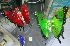 Butterflies in store (D70) Tags: new home westminster store do bc butterflies it warehouse lowes yourself improvement queensborough