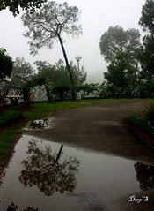 Reflection (keedap) Tags: shadow tree water rain deepak deep hamirpur keedap