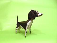 Beagle (or(EST)igami) Tags: dog beagle animal paper origami kawahata fumiaki