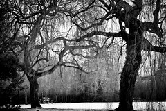 Click here to add a title |tell me a story| (Nassia Kapa) Tags: uk trees winter cambridge blackandwhite snow cold leaves lost noir noiretblanc fear atmosphere poetic feeling drama atmospheric filmnoir storytelling dramaticatmosphere noirmood nassiakapa