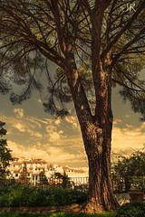 Tree in the Secret Garden. (Jenny Rainbow (jenny-rainbow.pixels.com)) Tags: park tree nature mystery garden spain secret ronda mysterious andalusia jennyrainbowartphotography thecasadelreymoro