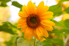 Smile! :) (SolsticeSol) Tags: beautifulflowerpictures beautifulflowerimages