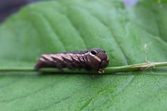 Caterpillar-1 (Jamie-Owens) Tags: