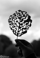 Herbstanfang (kairemwatt) Tags: autumn herbst bltter herbstanfang