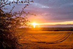 sunset_field_walking_3961-4 (allybeag) Tags: sunset fields solway cumbria crosby