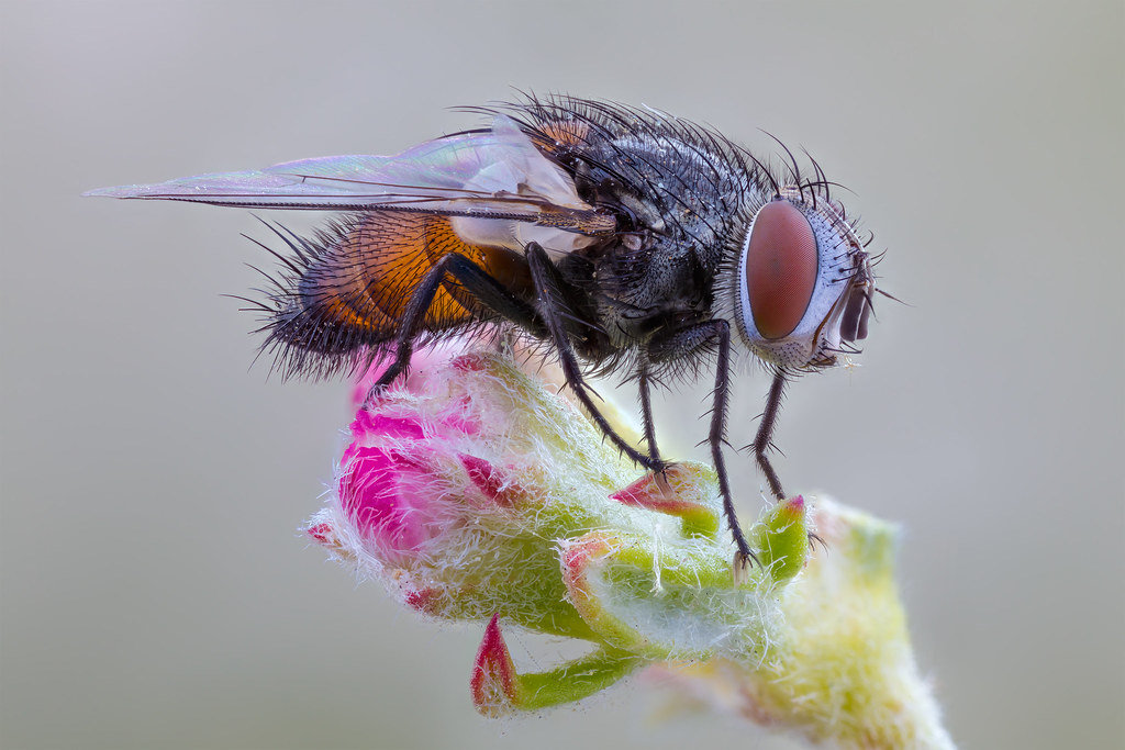 The World's Best Photos of insects and zerenestacker