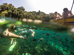 An italian family enjoying the beauty of the underwater life in Ko Lipe. (marcosborsatto) Tags: dive snorkel snorkeling thai thailand asia southeastasia underwater gopro blue colours turtle fish clowfish nemo diving