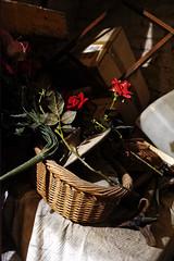 Caravaggio (falso) (S. Hemiolia) Tags: novellara gonzaga emilia d700 rosso red rose rosas roses rosa cesto vecchio abandoned abbandonato forgotten sacrestia sagrestia ripostiglio magazzino