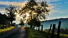 ~~Et encore mon chemin...!~~ (Jolisa { en vacances du 22 au 29 Sept.2016}) Tags: chemin path camihno matin evening soleil arbres trees barrire piquets septembre2014