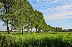 Landschaft bei Strakens / Landkreis Friesland (berndwhv) Tags: outdoor bume marschland ebene landschaft landscape landschap deutschland norddeutschland niedersachsen landkreisfriesland wangerland strakens baumreihe