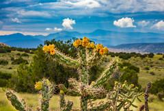Cactus point (Keegan - aka Boobie40) Tags: cactus newmexico highdesert desert mountains taos santafe view d810 nikon
