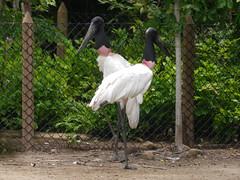 P2230292 (Gareth's Pix) Tags: aviarionacionaldecolombia baru colombia aviario bird