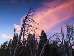 dead trees and clouds (Brent Howe) Tags: deadtrees mammoth california sky clouds color