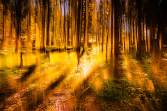In the Woods II (marco soraperra) Tags: trees wood landscape light sun backlight yellow orange green verde shadow doubleexposure explore explored artistic abstract sunset september nature forest warm colour colourful rich poetic