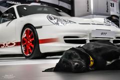 RS 996 (Alex m.p photography) Tags: porsche 996 gt3 rs gt3rs black white dogspot effspot like loud car follow