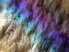 Rainbow on carpet (nikitalesnik) Tags: closeup rainbow carpet macrolens macro iphone