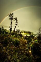 Rainbow (Photo Alan) Tags: rainbow street tree vancoucer canada rain